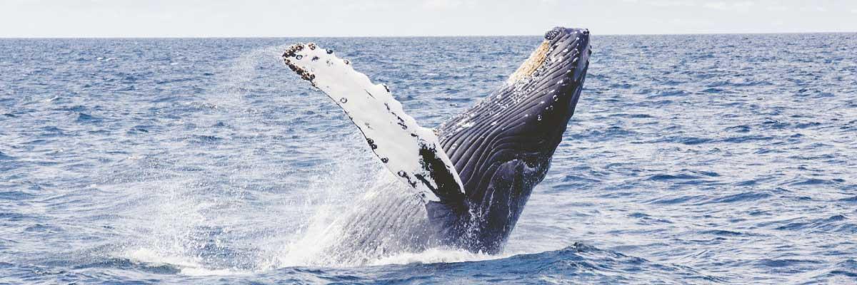 baleine_saut
