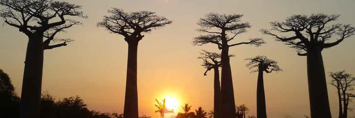 coucher_soleil_baobab